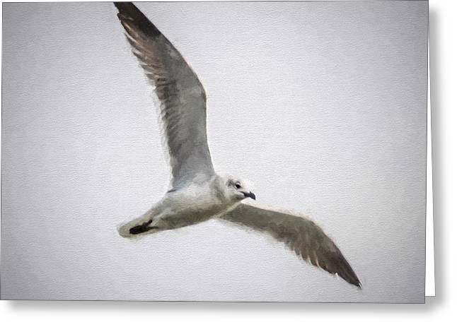 Seagull  Greeting Card by Scott Mullin