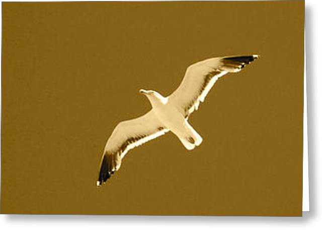 Flying Seagull Greeting Cards - Seagull Sepia Greeting Card by Cesar Marino