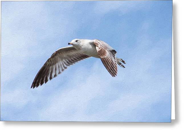 Flying Seagull Greeting Cards - Seagull Greeting Card by Snowbunny Photography Inc Lissette Corirossi