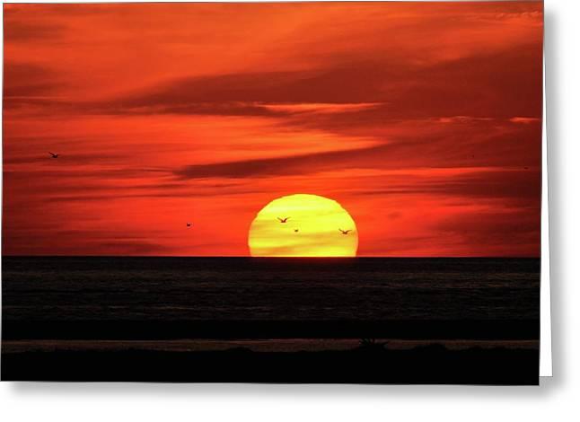 Al Powell Photography Usa Greeting Cards - Seagull Sunset Greeting Card by Al Powell Photography USA