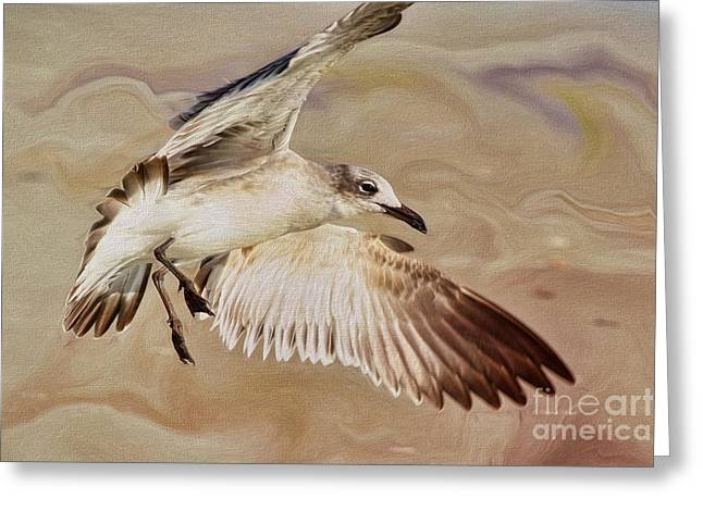Flying Seagull Greeting Cards - Seagull Swirl Greeting Card by Deborah Benoit