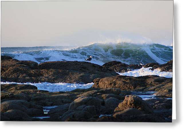 Ocean Art Photos Greeting Cards - Seagull waves Greeting Card by Nick Gustafson
