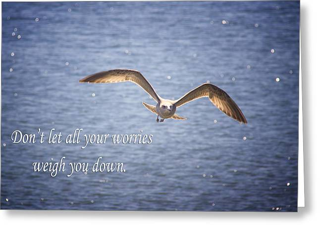 Nature Phots Greeting Cards - Seagull With Inspirational Words Greeting Card by Daphne Sampson