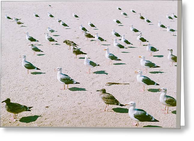 Seagulls  Greeting Card by Ariane Moshayedi