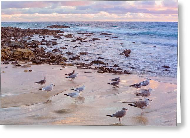 Seagulls At Sunset At Little Corona Beach Greeting Card by Ariane Moshayedi