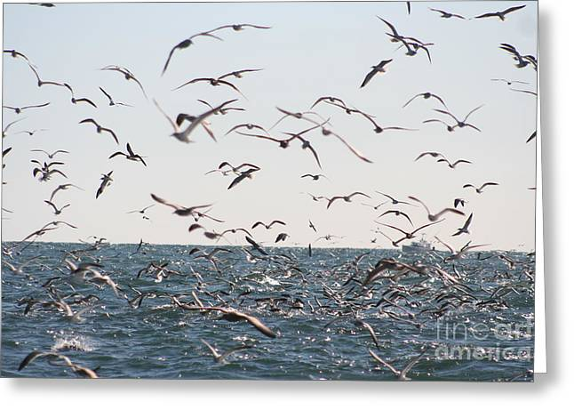Flying Seagull Greeting Cards - Seagulls Galore Greeting Card by Deborah A Andreas