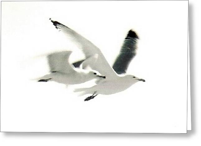 Flying Seagull Greeting Cards - Seagulls in Flight Greeting Card by Sarah  Kish