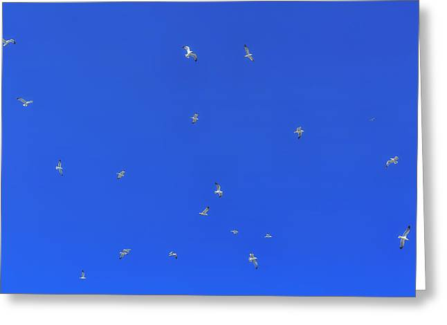 Seabirds Photographs Greeting Cards - Seagulls In The Blue Sky Greeting Card by Joana Kruse