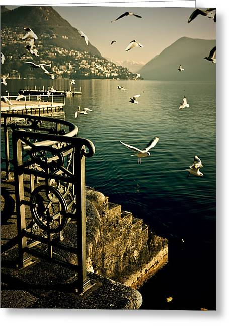 Flock Of Bird Greeting Cards - Seagulls Greeting Card by Joana Kruse