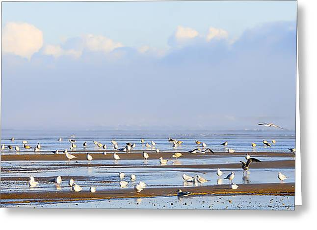 Flying Seagull Greeting Cards - Seagulls on a Beach Greeting Card by Svetlana Sewell