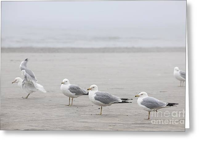 Foggy. Mist Greeting Cards - Seagulls on foggy beach Greeting Card by Elena Elisseeva