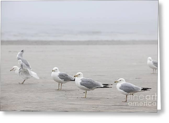 Seagull Greeting Cards - Seagulls on foggy beach Greeting Card by Elena Elisseeva
