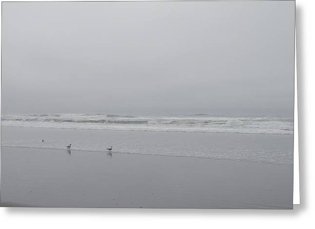 California Ocean Photography Greeting Cards - Seagulls On The Seashore Greeting Card by Teresa St George