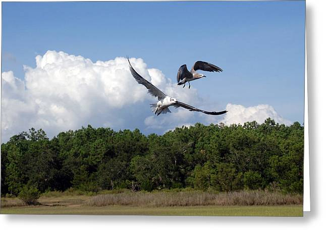 Flying Seagull Greeting Cards - Seagulls over Marsh Greeting Card by Susanne Van Hulst