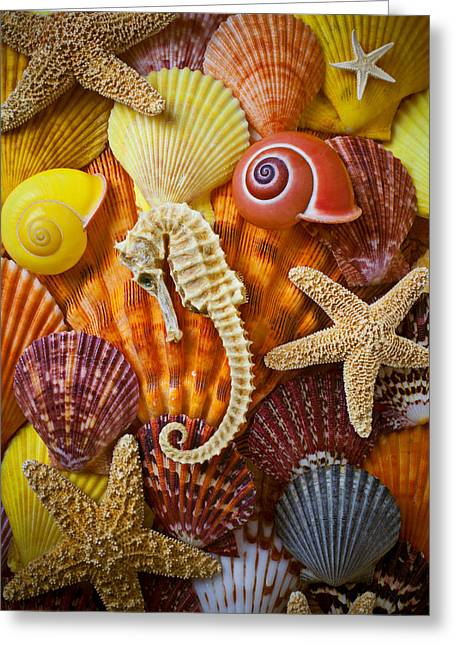 Marine Creatures Greeting Cards - Seahorse and assorted sea shells Greeting Card by Garry Gay