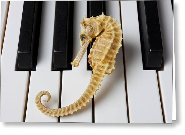 Playing Musical Instruments Greeting Cards - Seahorse on keys Greeting Card by Garry Gay
