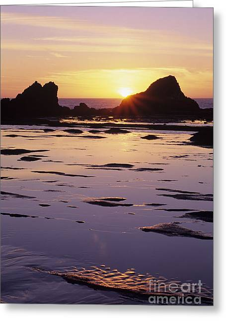 Lowtide Greeting Cards - Seal Rock Greeting Card by Greg Vaughn - Printscapes