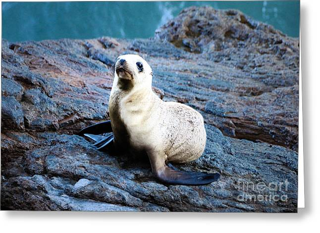 Sealions Greeting Cards - Sealion Greeting Card by Marc Bittan