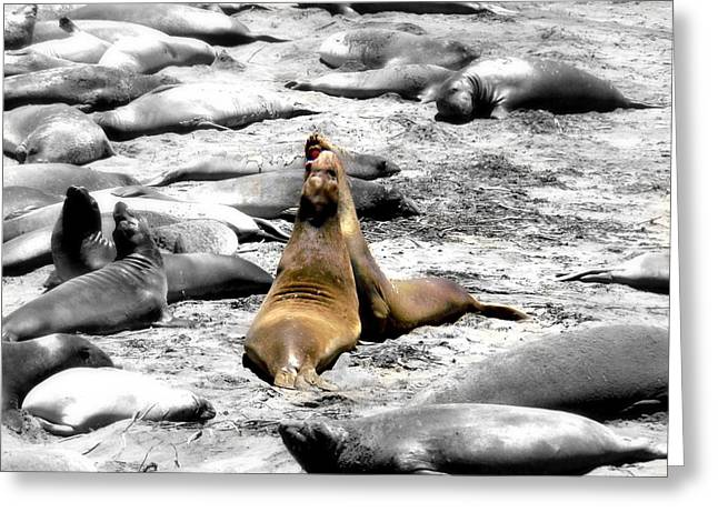 Lions Greeting Cards - SeaLions Cambria Greeting Card by Melissa KarVal