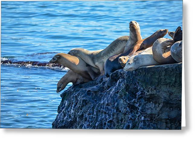 California Sea Lions Greeting Cards - Sealions on the Cliff Greeting Card by Asif Islam