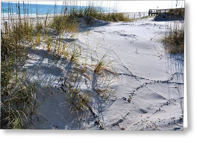 St. George Island Greeting Cards - Seaoat Shadows Greeting Card by Jan Amiss Photography
