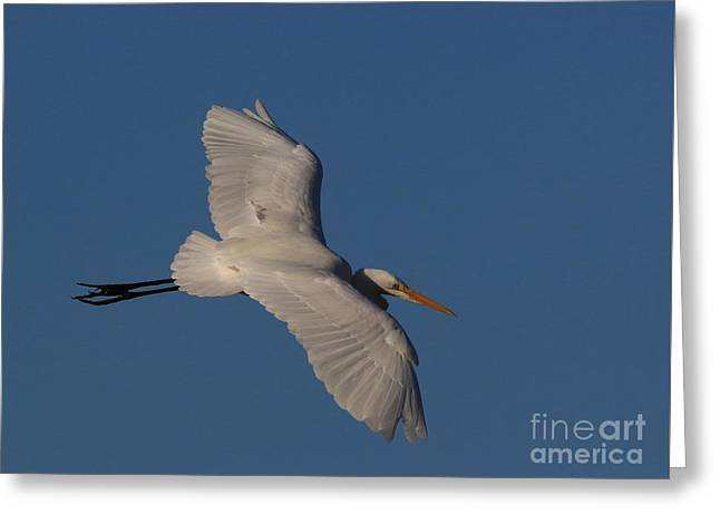 Hunting Bird Greeting Cards - Searching For A Landing Site Greeting Card by Craig Corwin