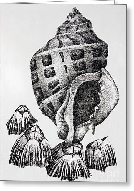 Seashell Drawings Greeting Cards - Seashell and Barnacles Greeting Card by James Williamson
