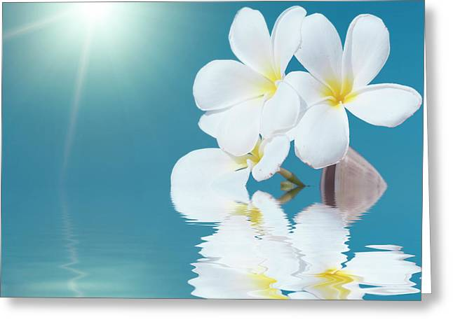 Frangipani Greeting Cards - Seashell and flower in the sea Greeting Card by MotHaiBaPhoto Prints