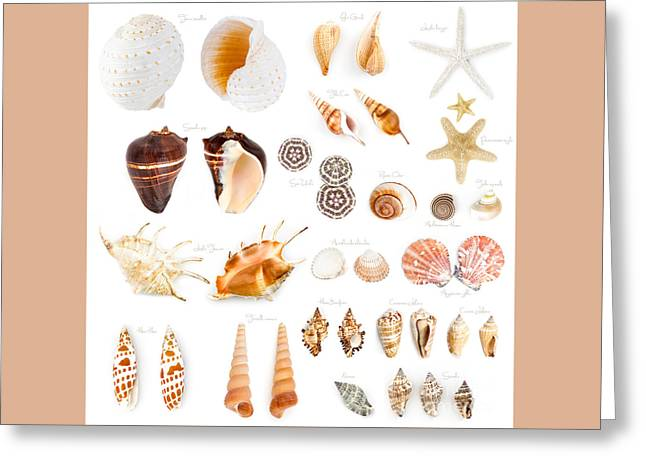 Shell Texture Greeting Cards - Seashell Collection Isolated On White Greeting Card by Ezeepics