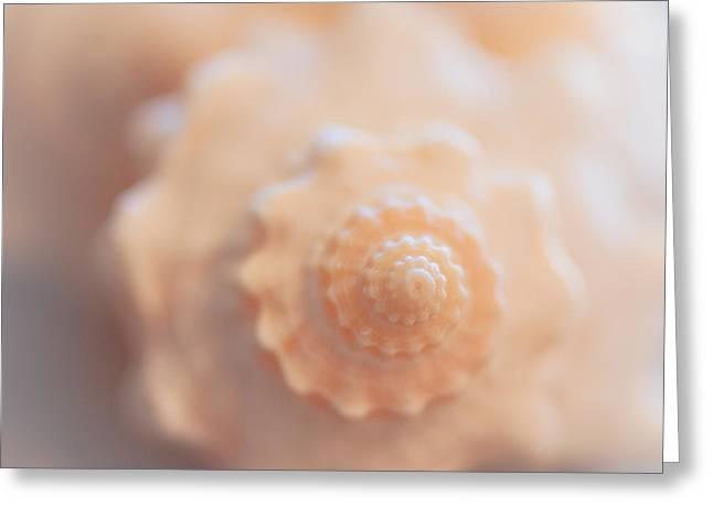Soft Greeting Cards - Seashell Dream Greeting Card by Ana V  Ramirez