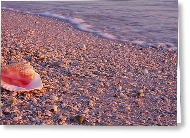 One Object Greeting Cards - Seashell On The Beach, Lovers Key State Greeting Card by Panoramic Images