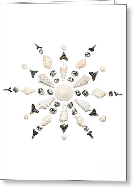Shell Pattern Greeting Cards - Seashell Snowflake 3 Greeting Card by Jennifer Booher