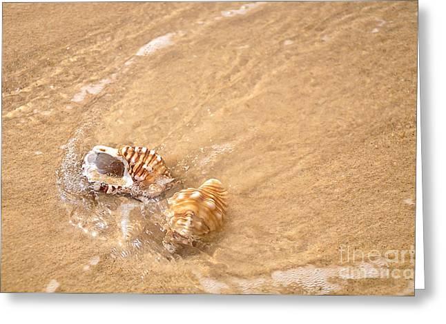 Kaye Menner Shells Greeting Cards - Seashell Turbulence Greeting Card by Kaye Menner