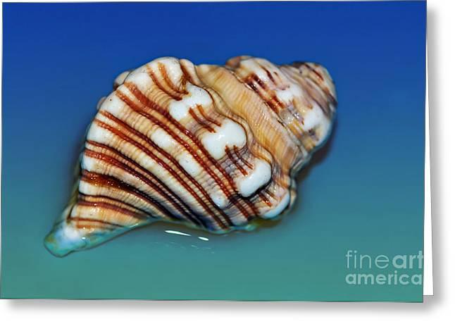 Kaye Menner Shells Greeting Cards - Seashell Wall Art 1 Greeting Card by Kaye Menner