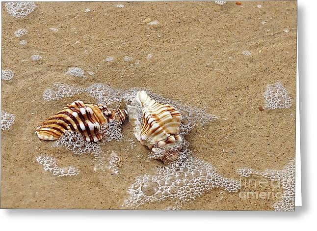 Seashells And Bubbles 2 Greeting Card by Kaye Menner