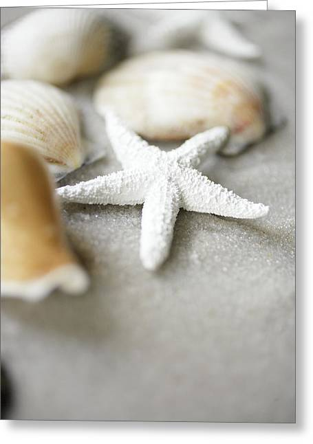 Beach Decor Photographs Greeting Cards - Seashells And White Starfish On Sand Greeting Card by Gillham Studios