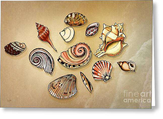 Aquatic Greeting Cards - Seashells Collection Greeting Card by Bedros Awak