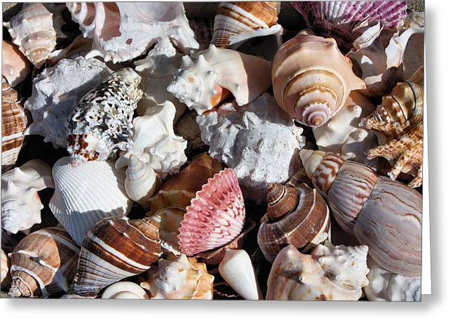 Seashells Greeting Card by Kristin Elmquist