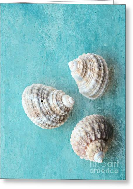 Seashells On Turquoise Greeting Card by Carol Groenen