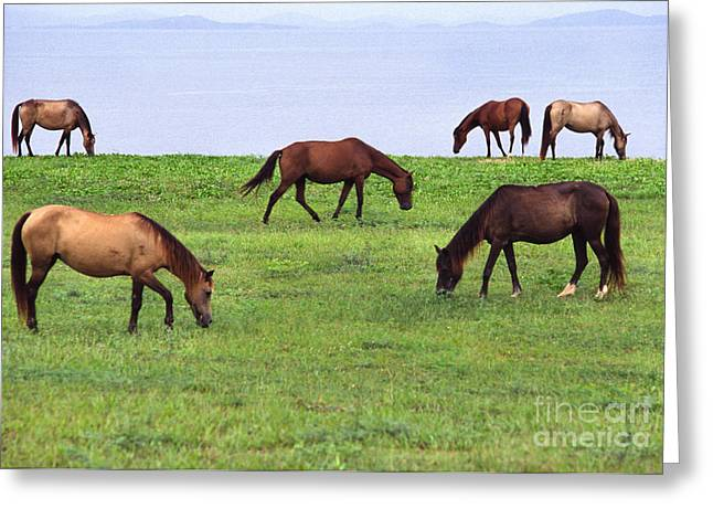 Paso Fino Horse Greeting Cards - Seaside Grazing Greeting Card by Thomas R Fletcher