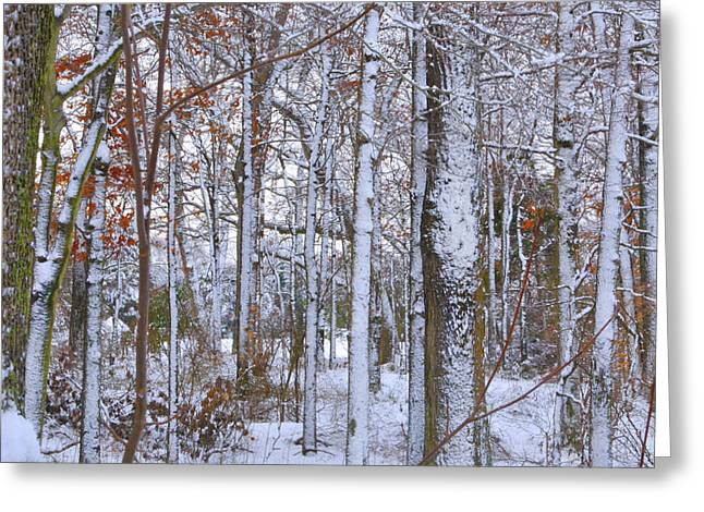 Snow Tree Prints Greeting Cards - Seasons First Snow Greeting Card by Gerlinde Keating - Keating Associates Inc