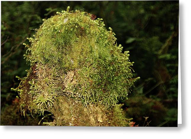 Seasons of Magic - Hoh Rainforest Olympic National Park WA Greeting Card by Christine Till
