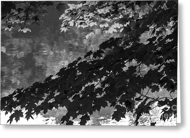 Tree Leaf On Water Greeting Cards - Seasons Reflection Greeting Card by Amanda Sinco