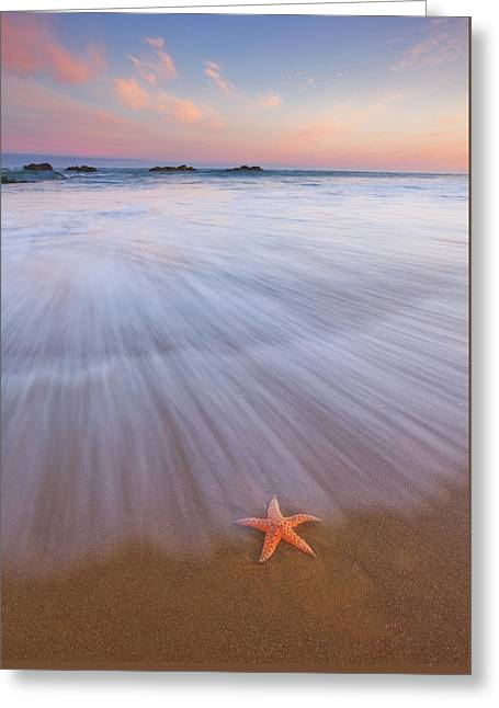 Seastar Sunrise Greeting Card by Darren White