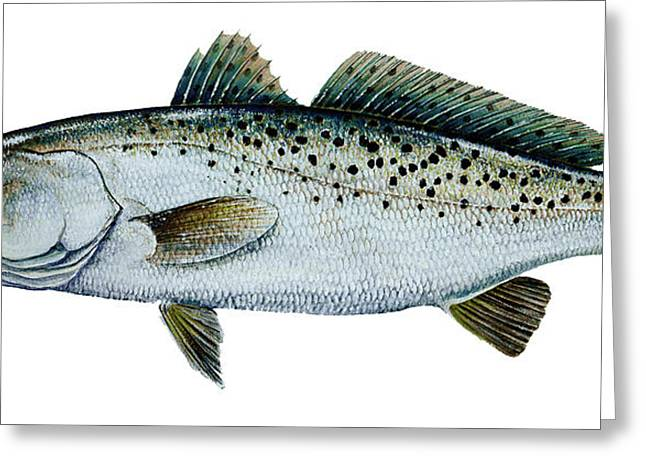 Kevin Brant Greeting Cards - Seatrout Greeting Card by Kevin Brant