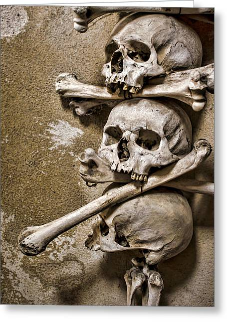 Osteology Greeting Cards - Sedlec Crania and Humeri Greeting Card by Heather Applegate