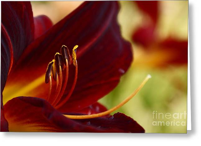 Seductive Photographs Greeting Cards - Seduction After the Rain Greeting Card by Joanne Smoley