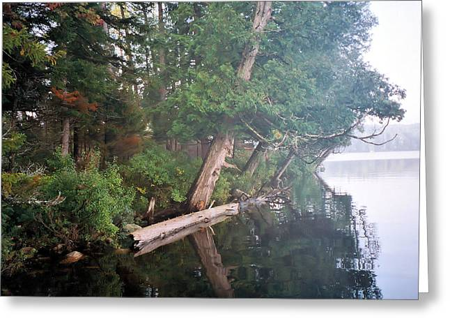 See Fog Greeting Cards - See Where I Live Greeting Card by Joel Cecil