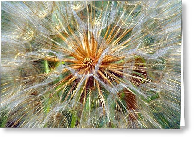 Marty Koch Greeting Cards - Seeds Greeting Card by Marty Koch
