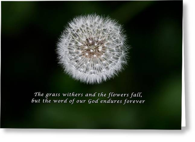Isaiah Greeting Cards - Seeds of Truth from Isaiah 40 Greeting Card by John Haldane